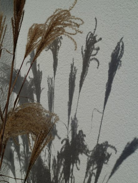 Garten 'Impressionen '