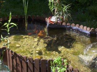 Mein Gartenteich