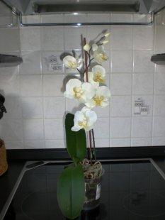 Tipp & Trick 'Für Orchideenfreunde'
