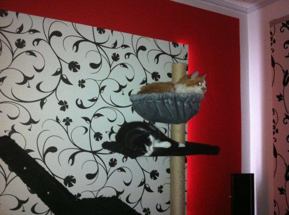 Haustiere 'Katzenreich'