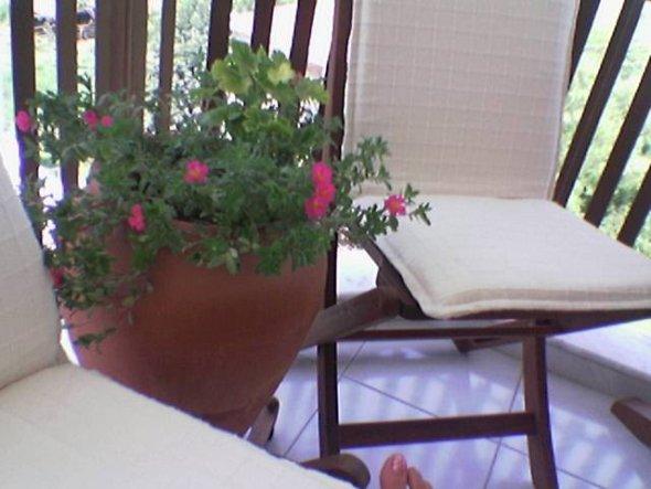 terrasse balkon 39 mein blumen 39 meine wohnung in antalya zimmerschau. Black Bedroom Furniture Sets. Home Design Ideas