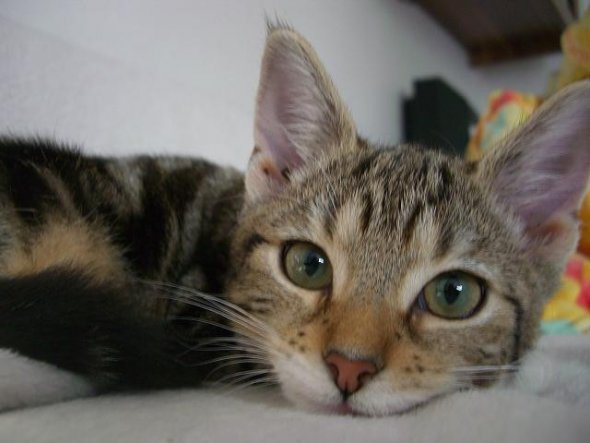 Haustiere 'Unsere Kitty'