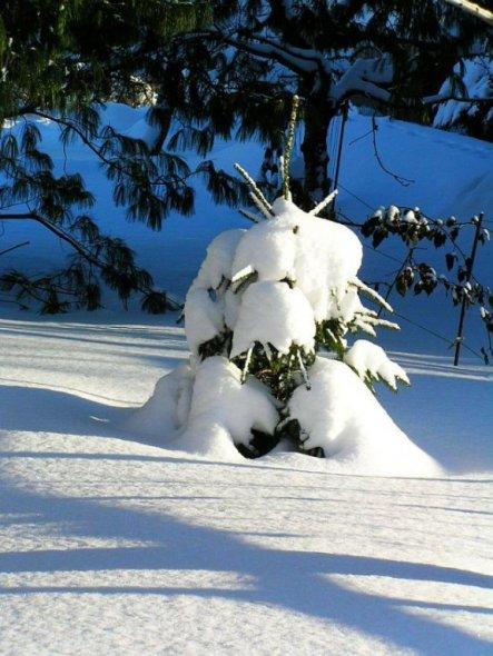 Das sollte eigentlich der Weihnachtsbaum werden - nun, ich denke, ich will ihn nicht 1 m tief ausgraben.