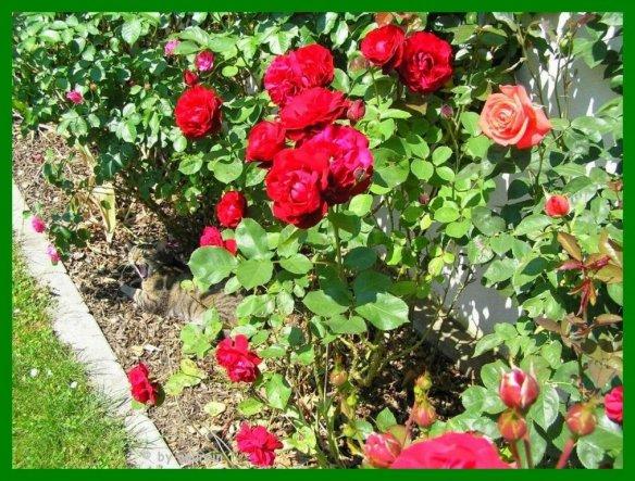 Das ist mein Suchbild: Wer hat sich in der Rosenrabatte versteckt?