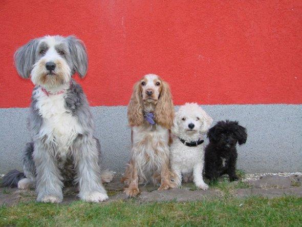 Haustiere 'Unsere Tiere'