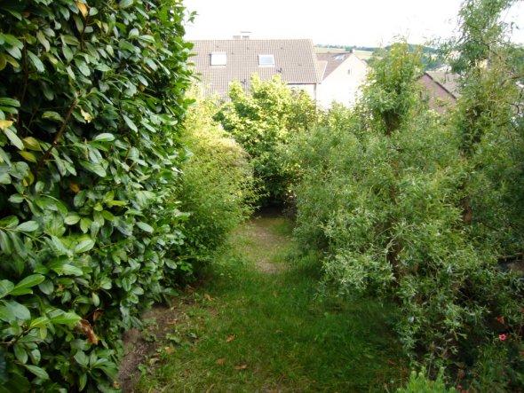 So sah der Garten vorher aus.Viel zu große Bäume und Riesenkirschloorbeer in einem kleinen Garten