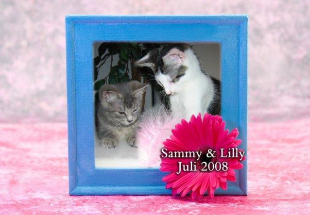 Haustiere 'Sammy, Lilly & die Fischlein'