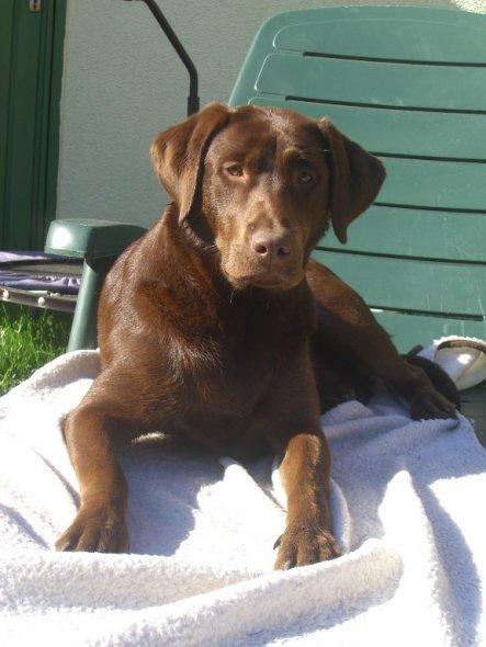 ...tut auch dem Hund gut: Sonnenbaden!