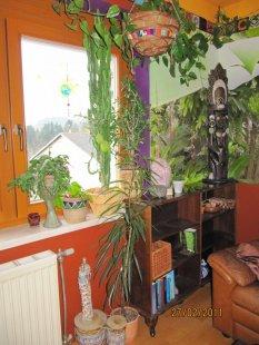 Exotisch 'Wohnzimmer 2010 in rotbraun'