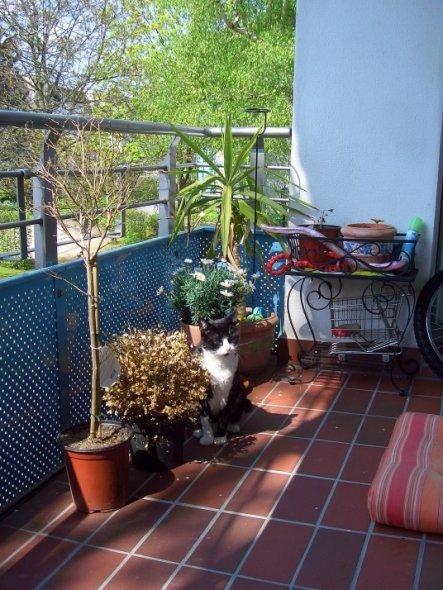 Terrasse / Balkon 'Inselchen'