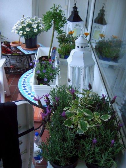 Terrasse / Balkon 'neue Insel'
