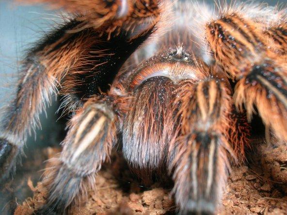 """Für die Dame die meinte """"Die Spinne sieht man nicht"""" ;)"""
