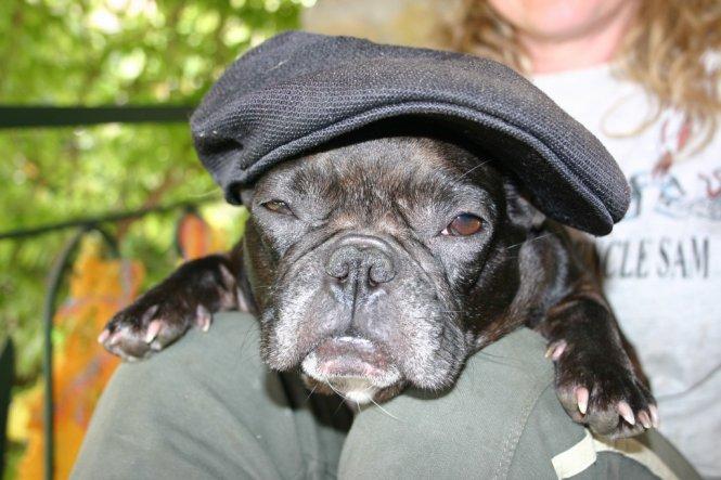 Französiche Bulldoge...Sehr Gefährlich......