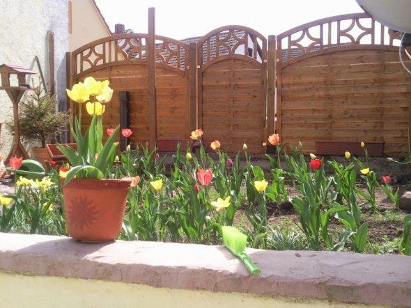 Garten mit Tulpen im Frühjahr