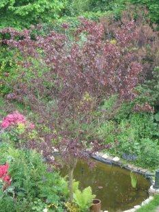 Balkonien und Garten