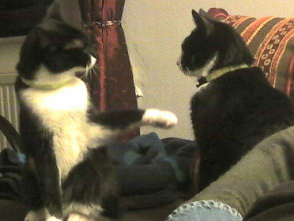 Haustiere 'Karate Katzen ;o)'