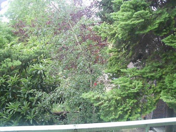 Hier schaue ich von meinem Balkong in die Natur und werde morgens mit Vogelgezwitscher wach.