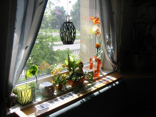 durchs Küchenfenster Blick in den Vorgarten und auf die Strasse
