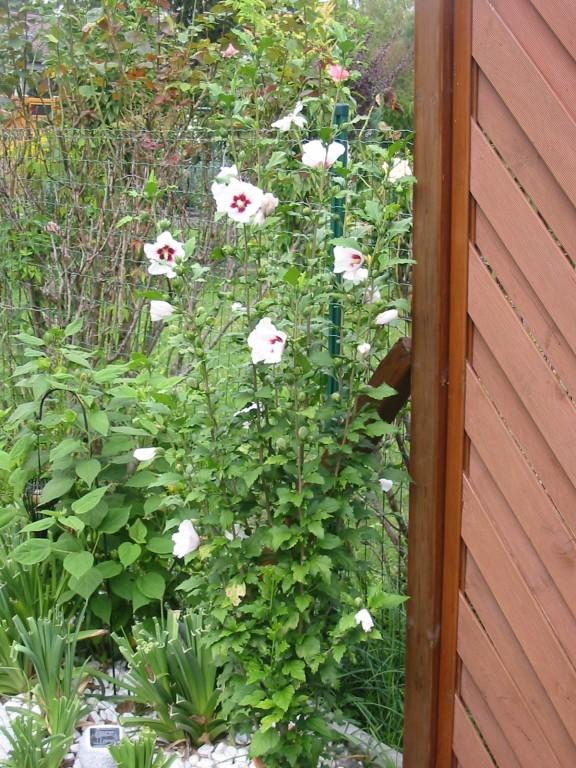 Garten Garten  Mein Nest  Zimmerschau