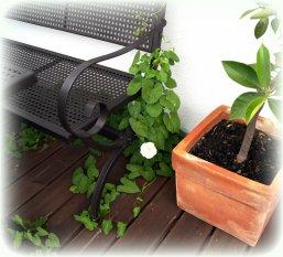 Terrasse / Balkon ''