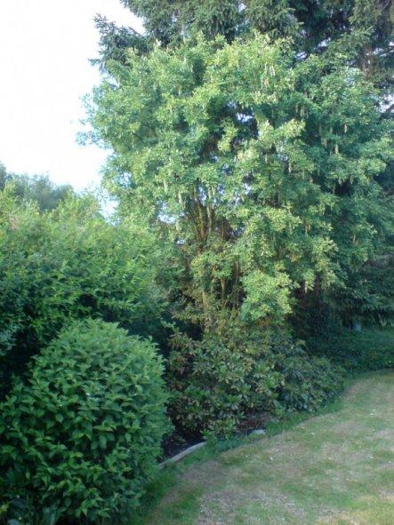 Garten 'Garten Rundgang 1'