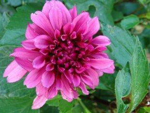 Garten - Blüten