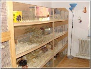 Tierzimmer
