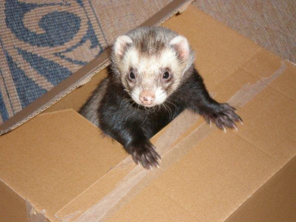 Zur Erinnerung an unseren Dickie! Wir mussten ihn leider kürzlich einschläfern lassen. *heul* Er hat bei uns im Garten sein kleines Grab