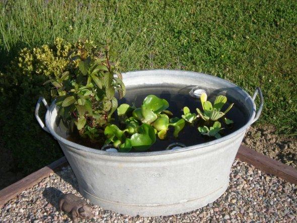 Da wir leider (noch) keinen Gartenteich haben musste die kleine Wanne erst einmal als Miniteich herhalten.