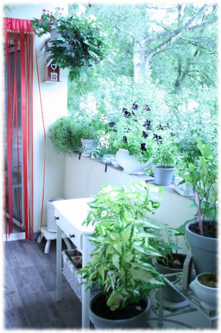 Terrasse / Balkon 'klein Balkonien'