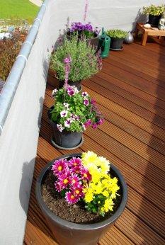 Blumen auf der Dachterrasse