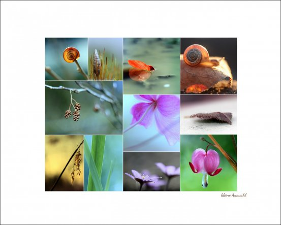 Hobbyraum 'Fotografie'