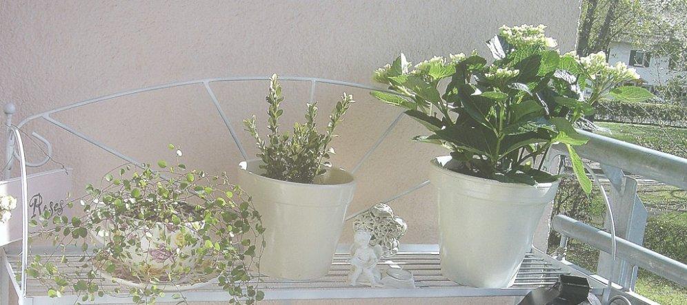 Terrasse / Balkon 'Vorfrühlingsbalkon'