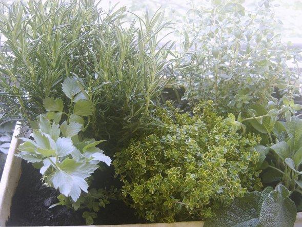"""auch ein kleiner """"Kräutergarten"""" darf nicht fehlen"""