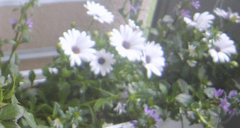 Seht Ihr die kleinen lila Blüten? Die passen eigentlich gar nicht in mein Farbkonzept, aber ab und zu muss man - ich meine frau - nachgeben. ;-)))