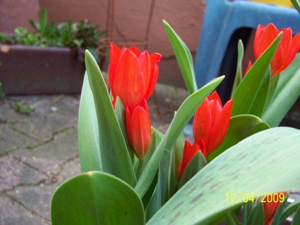 Im Topf die ersten Blumen