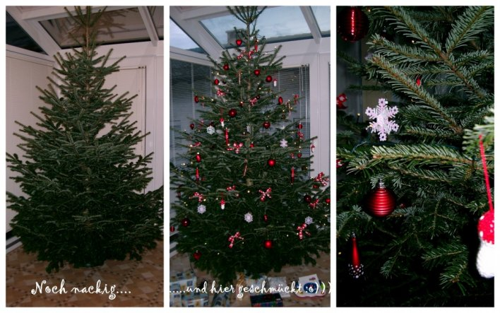 Hier unser diesjähriger Christbaum....er ist so hoch, daß er im Wohnzimmer nicht Platz hatte und somit heuer im Wintergarten steht ;o)))