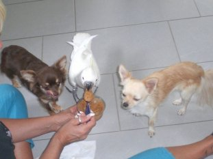Haustiere