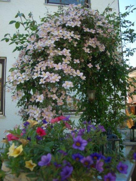 Garten 'Frühlingsgefühle 2009'