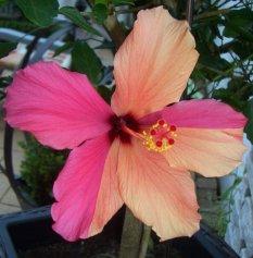 Blütenimpressionen