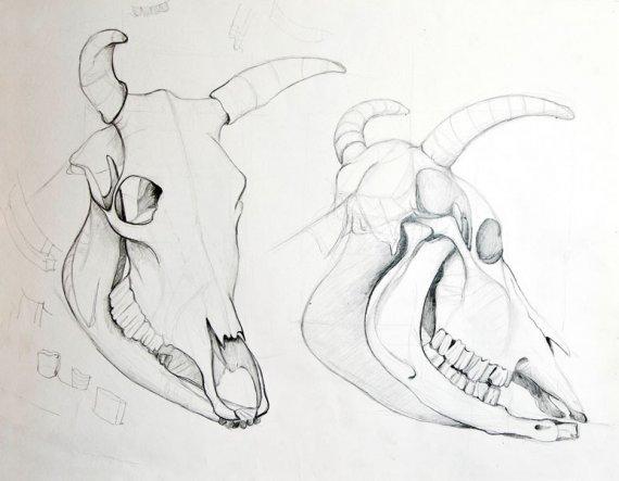Zwangs-Zeichenstudie - im Designstudium musste ich u.a. Tierschädel zeichnen. Der Prof stand daneben und hat dauernd 'rumgemeckert. ;-) Dennoch bin ic