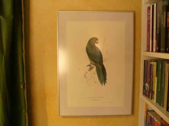 Ich bin gerade ganz verrückt nach den Papageiengrafiken von Edward Lear - hier eine davon. (Reprint natürlich! :-))