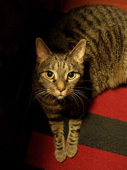 Haustiere 'Katzengalerie'