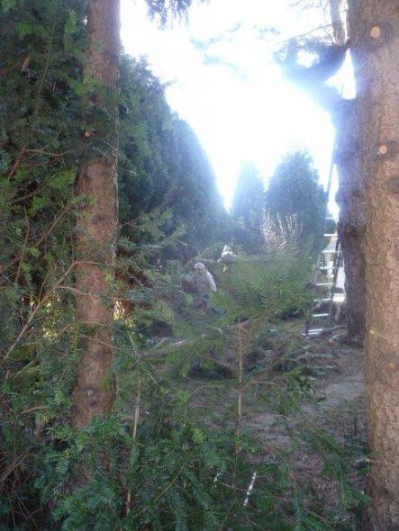 unsere meterhohen Bäume mussten leider gefällt werden. Unser Garten war ein kleiner Märchenwald ;) leider alles zu dunkel und die alten Bäume teilweis
