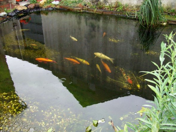 Garten 'Unser Teich'
