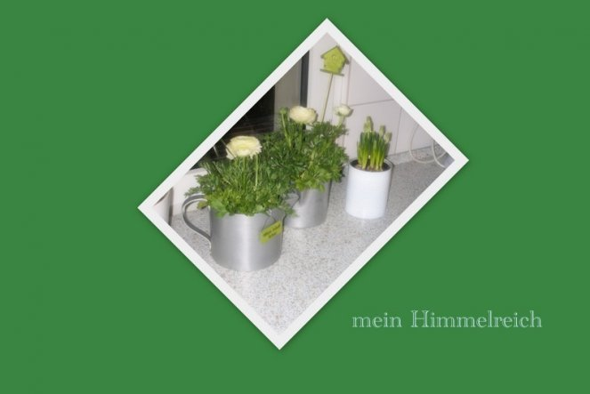 Küche 'Meine Küche 2010'