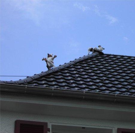 Hausfassade / Außenansichten 'Aussenansicht - endlich neu'