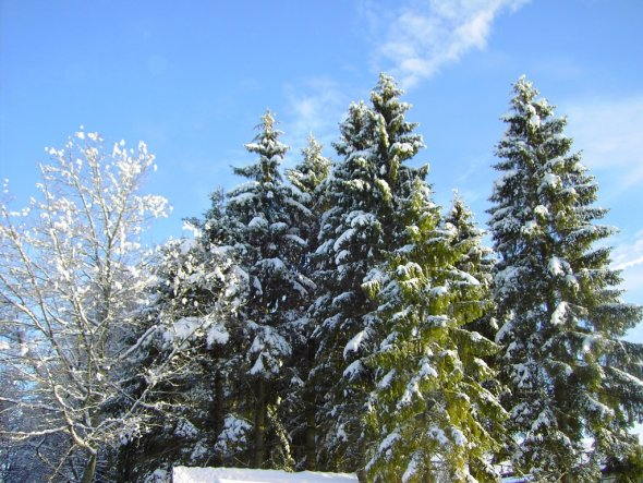 Hausfassade / Außenansichten 'Winter'