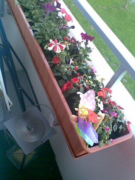 Terrasse / Balkon 'mein kleiner schlichter balkon'