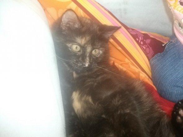 Hier ein Neues Bild von Lolli. sie ist für ihre fast 8 monate immernoch so klein. und rollig werden ist bisher auch noch nich